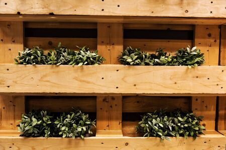 plant pots: Plant pots on wooden container to decorate by the wall