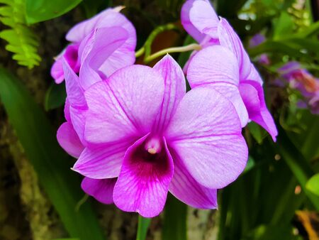 Bouquet of Purple orchids hanging from a tree Stock Photo