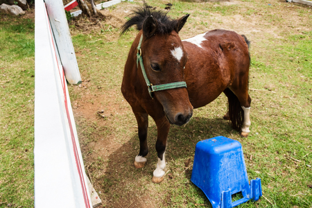 mini farm: Mini dwarf horse at a farm by top view Stock Photo