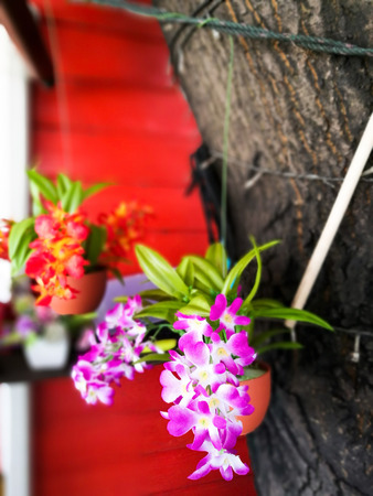 orchid house: fake orchid flower in the pot for house decoration Stock Photo