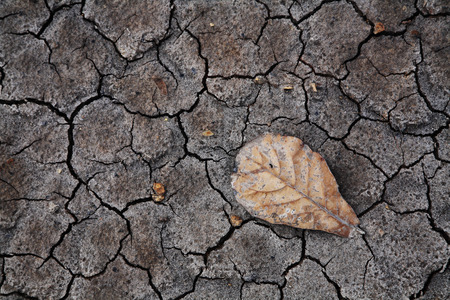 Brown drying leaf on dry cracked earth