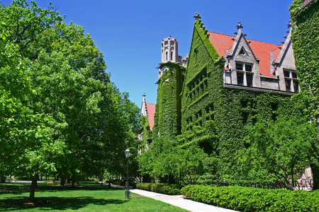 Ivy clad halls against blue sky of the University of Chicago campus
