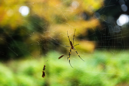 Spider on web with autumn color bokeh background Stock Photo