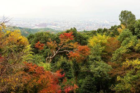 acer palmatum: Autumn foliage with Kyoto skyline from top of Fushimi Inari, Japan Stock Photo