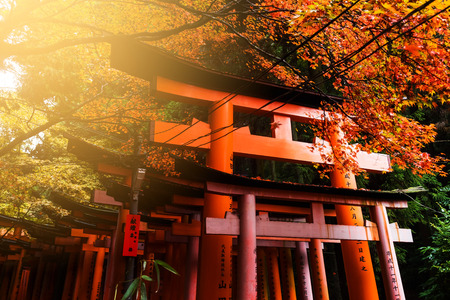 KYOTO, JAPAN - NOVEMBER 20, 2016: Giant torii gate with red autumn foliage in Fushimi Inari Shrine against sunset. Here is one of the most famous landmarks in Kyoto. Editorial