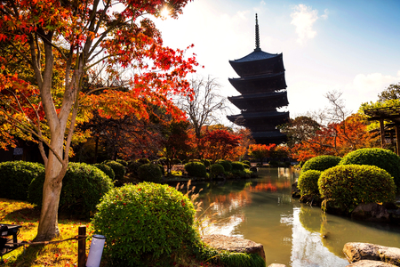 Wooden tower of Toji Temple in autumn, Kyoto, Japan. Here is the largest temple pagoda in the country at a height of 54.8 meters. Editorial