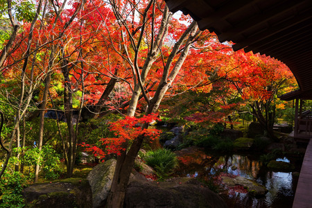 Kokoen Garden with autumn foliage in Himeji, Japan