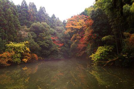 momiji: autumn leaves near pond with reflection at Fushimi Inari, Kyoto, Japan