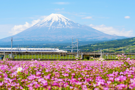 Bullet train, Shinkanzen, passes Mt. Fuji and Shibazakura at spring, Shizuoka, Japan