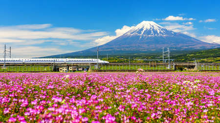 SHIZUOKA, JAPAN - MAY 05, 2017:  Shinkanzen or Bullet train run pass through Mt. Fuji and Shibazakura at spring. Shinkansen, super high speed railway, operated by Japan Railways companies.