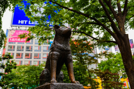 TOKYO, JAPAN - MAY 7, 2017:  Statue of Hachiko, an Akita dog which is famous on the loyalty to his owner until the death, near Shibuya Station. 報道画像