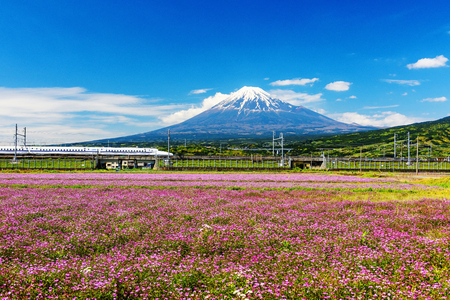 SHIZUOKA, JAPAN - MAY 05, 2017: Shinkansen or Bullet train run pass Mt. Fuji and Shibazakura at spring. Shinkansen, super high speed railway, operated by Japan Railways companies. Editorial