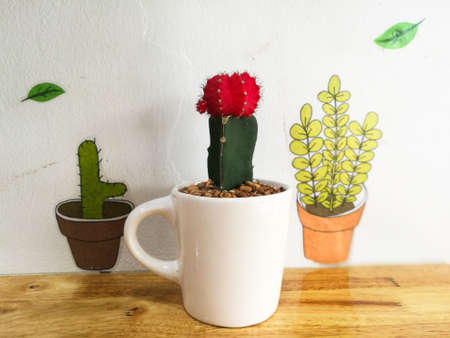 avocation: Closeup fresh red cactus on white cup decorated on wooden table with cute plant painted on the wall