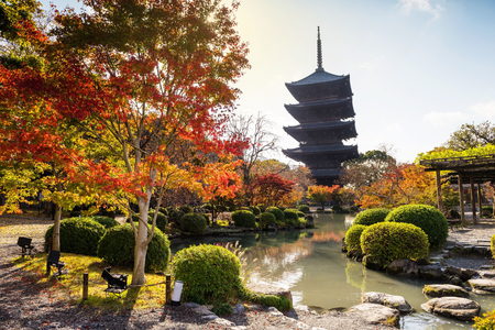 koyo: Colorful Autumn at Toji Temple against sunlight, Kyoto, Japan Editorial