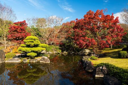 Koko-en fall garden near the small pond with reflection against clear blue sky in Himeji, Japan. Here is very famous to see autumn foliage colors during late November.