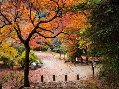 red carpet background: Autumn foliage colorful trees on Arashiyama mountain footpath to access to the peak viewpoint in Kyoto, Japan. Here is very famous during fall season.