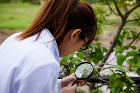 Young smart Asian agronomist scientist woman in white coat checking green leaf by magnifying glass corn in garden. Science and Education lab inspection and testing concept. Stock Photo