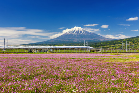SHIZUOKA JAPAN - MAY 05 2017: Shinkansen or JR Bullet train running pass through Mt. Fuji and Shibazakura at spring with blue sky. Super high speed train N700 can transit between Tokyo and Osaka. Editorial