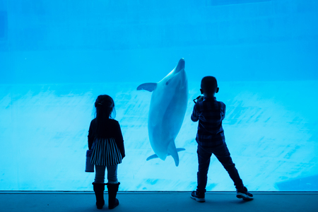 Silhouette girl enjoy watching and boy taking photo of dolphins in aquarium. Kids or Children fun activity.