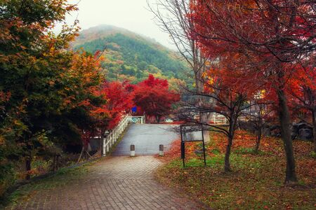 Autumn foliage colors at park in Kawaguchiko with heavy mist in morning, Yamanashi, Japan. Famous travel destination to see Fuji mountain. Standard-Bild - 128219347