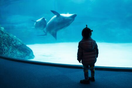 Silhouette child girl enjoy watch swimming dolphins in aquarium. Kids or Children fun activity with copy space for text. Stock Photo