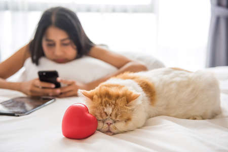 Yellow exotic shorthair cute cat sleep near red heart on bed while its female owner play social media, chat with boyfriend on smartphone. Adorable animal pet with valentine love concept.