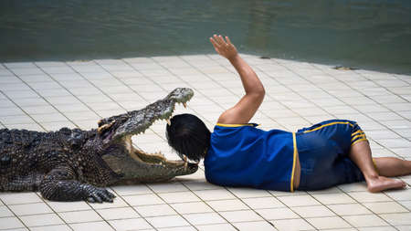 Thai stunt man showed his head stuffed into the crocodile's mouth