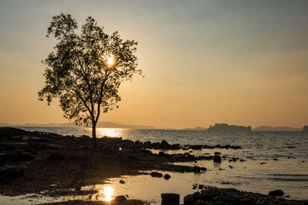 Silhouette tree and seascape by andaman sea against sunset at Koh Kwang island in Klong muang and Tub kaek beach in Krabi, Thailand. Famous travel destination. 免版税图像