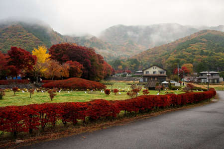Maple corridor or Momiji Kairo and Japanese village in valley with autumn leaf and heavy mist in morning, Kawaguchiko, Japan. Famous travel destination during fall season. 新闻类图片