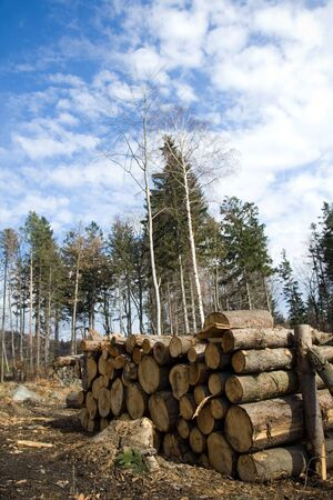 multi national: Deforestation area with pile of logs in forest and blue sky with fluffy clouds.