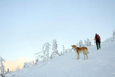 Winter hiking in mountains with Japanese Akita dog. Young woman going up the Szrenica in Polish mountains. photo