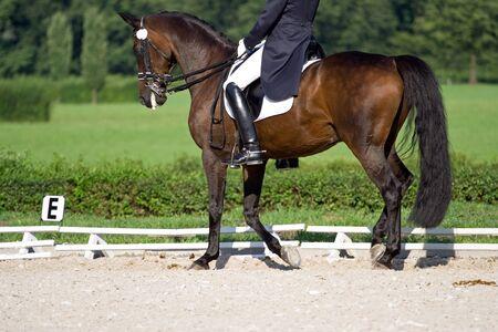 Horse dressage competition photo