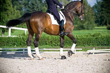 Horse dressage outdoors photo