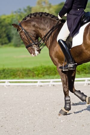 dressage: Horse dressage outdoors during stormy weather