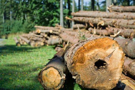 woodpile: Woods in green forest