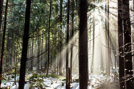 Forest in winter or autumn fall season. Sunrise sunlight rays on woods, fog, and mist in park photo