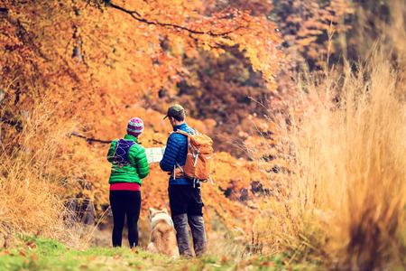 Man and woman hikers hiking in autumn colorful forest with akita dog. Young couple looking at map and planning trip or get lost