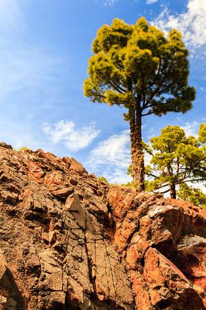 la: Mountains inspirational rocky landscape with canarian pine tree, Canary Islands La Palma Stock Photo