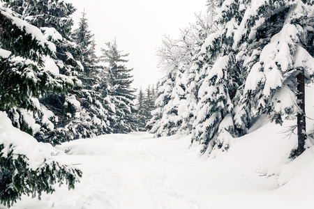 Winter forest, white trees inspiring landscape. White road or footpath with deep powder snow. Beautiful inspirational scene with frame made of trees with copy space. Imagens