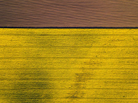 Aerial view of yellow colza rape fields, agriculture concept from drone perspective. Horizontal framing directly above fields. 写真素材