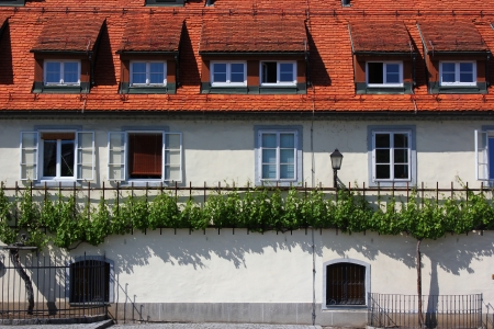 house of the oldest vine in the world, Maribor, Slovenia