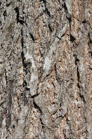 bark of tree - close-up photo