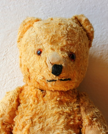 half-length portrait photo of teddy bear toy