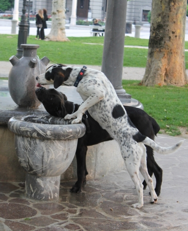 dogs drinking water from a fountain in the park Stock Photo