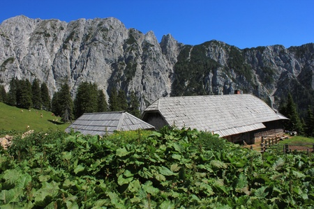 Alpine hut Korosica in Karavanke mountains  Slovenian Alps  with monks rhubarb  rumex alpinus  in the foreground Stock Photo - 14318657