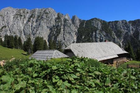 Alpine hut Korosica in Karavanke mountains  Slovenian Alps  with monks rhubarb  rumex alpinus  in the foreground Stock Photo - 14318657