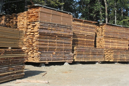 Orderly stacks of timber planks - wood industry Stock Photo