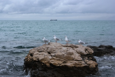 Adriatic seascape with four seagulls, Slovenia Stock Photo