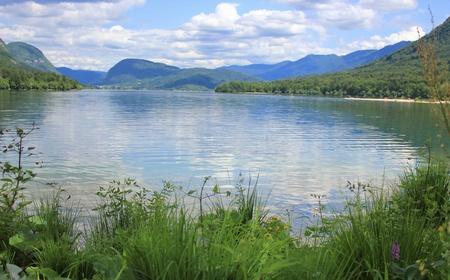 green vegetation: Bohinj lake green vegetation, Bohinjsko jezero, Slovenia