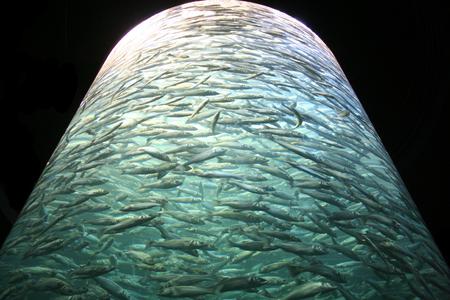Huge cylindrical aquarium tank full of swimming fishes